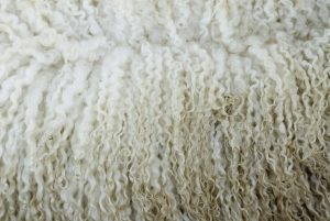 Sheep's wool crimp